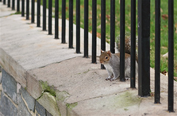 photoblog image Squirrel at the gates